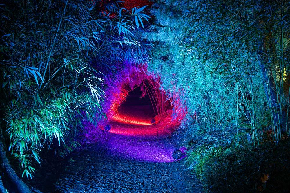 Abbotsbury Enchanted Illuminations 2019